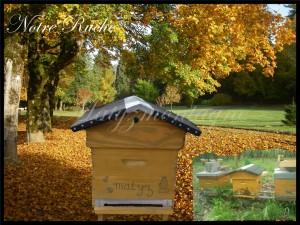 Chambres d'hôtes à la  Bourboule - Matyzmontagne - ruche